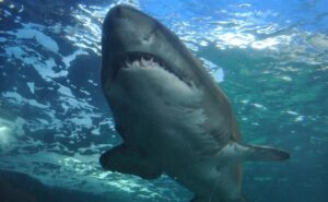 Man Dies After Being Bitten By Shark At A Popular Tourist Beach In Australia